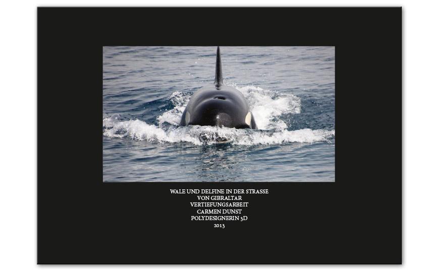 Wale und Delfine in der Strasse von Gibraltar