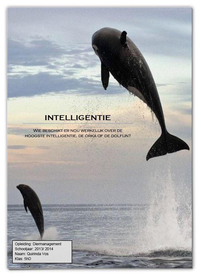 INTELLIGENTIE Wie beschikt er nou werkelijk over de hoogste intelligentie, de orka of de dolfijn?