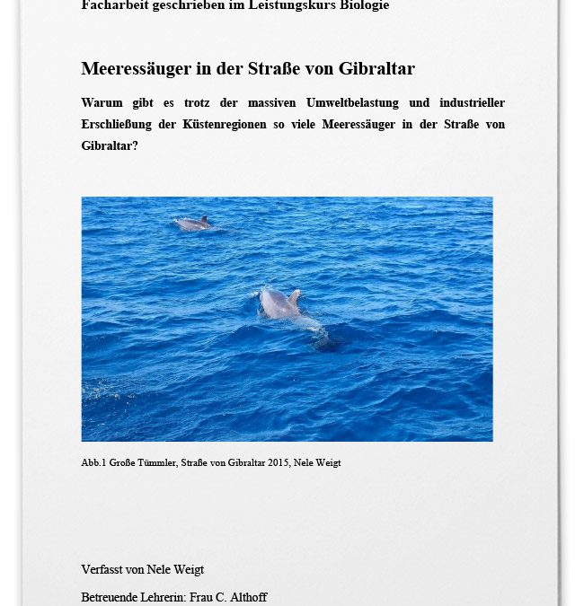 Meeressäuger in der Strasse von Gibraltar